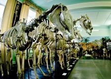 Корова Волга и ее рекорды