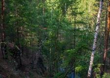 Замок в лесу. Самая подлинная история Французской горки